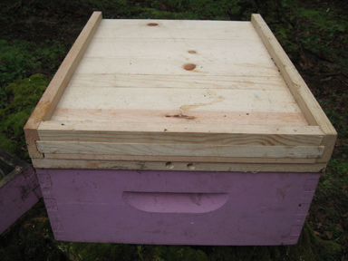 Divider Platform From Established Hive's Entrance Side