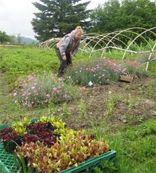 Farmer Solem of Sumas River Farm works in field