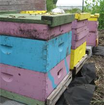 Brookfield Farm beehives at Sumas River Farm
