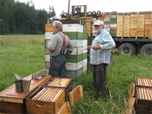 Beekeepers Bowen and Ray with supers ready to put on hives