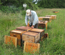 Beekeeper Ray begins to put honey supers on Some of Bruce Bowen's hives