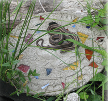Common Garter Snake suns itself on concrete by Brookfield Farm hives
