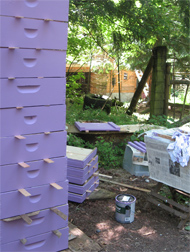 Brookfield Farm Bee Boxes : Purple for 2010