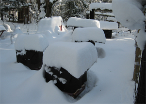 Snow covered beehives at Brookfield Farm, Washington