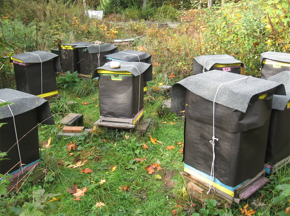 "Hives in tarpaper & roofing ""hats"""