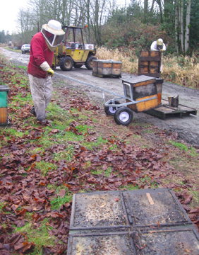 Beekeeper Bowen moves honeybees to new pallet