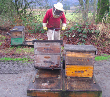 Beekeeper Bowen sets the hive down on a new pallet