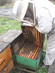 Bruce Bowen checks the honeybee cluster between brood boxes