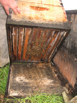 Bees Hang from the bottom brood box