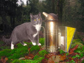 Kitten examines bee hive smoker