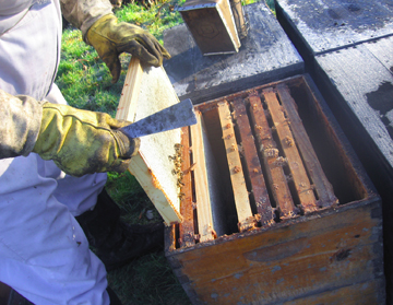 Beekeeper Ray removes frame from honey bound hive