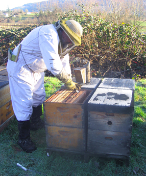 Beekeeper Ray works to correct a honey bound hive