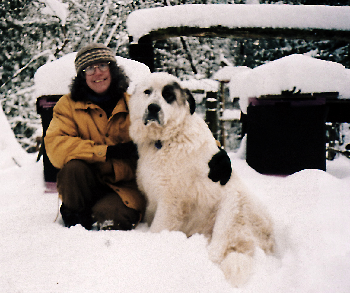 Beekeeper and Livestock Guard Dog at beehives in the snow