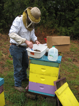 Checking bees for the USDA bee health survey