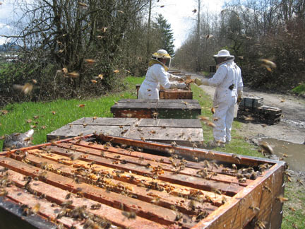 "Beekeepers make bee hive ""splits"" at Bruce Bowen's Bee Yard"
