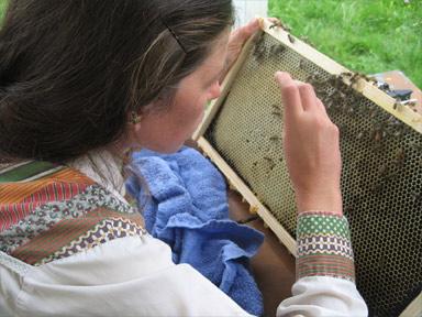 Grafting honeybee larvae to create queen cells