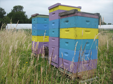 Brookfield Farm hives in farmland