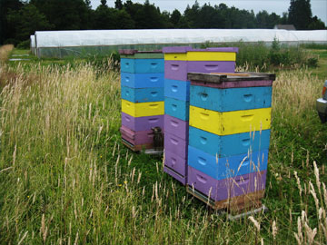 Brookfield Farm Hives at Spring Frog Farm at Holistic Homestead, WA