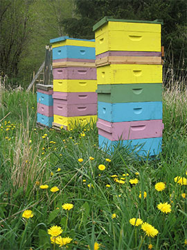 3 of Brookfield Farm Bees And Honey's hives near Mt. Baker in Washington