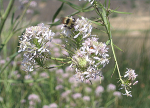 Bumblebee & Ladybug at Dry Falls, WA