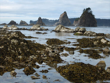 Tide Pools on the western shore of the Olympic Peninsula
