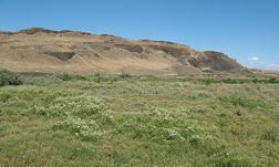 Desert Meadow Eastern Washington by Auritulus Cinereus