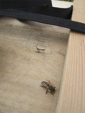 Honeybee on bee box