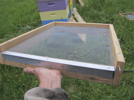 Bee hive bottom screen