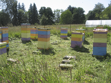 Honeybee hives in Northwest Washington state