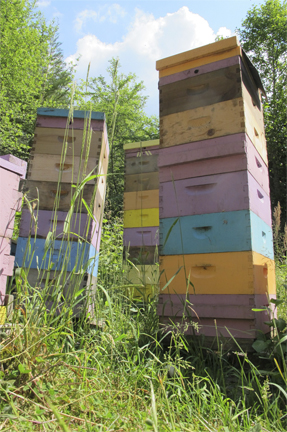 Tall Bee Hives at Brookfield Farm, Maple Falls, Washington